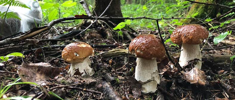 Сезон грибов в Терехуни